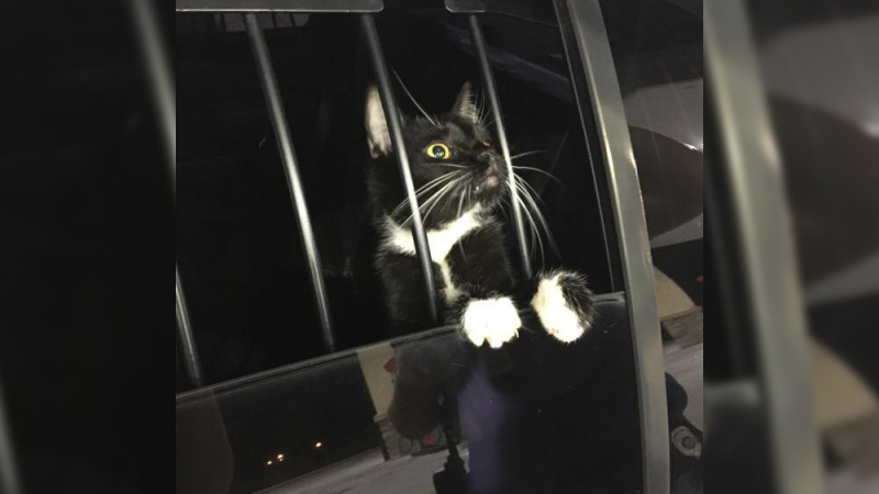 Gato é 'preso' suspeito de furto